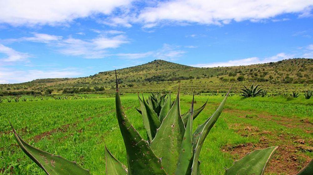 EL-NECTAR-DE-LOS-DIOSES-LA-FERIA-DEL-PULQUEDESDE-CIUDAD-DE-MEXICO